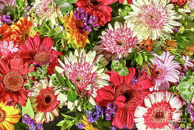 Photograph - Cheerful Spring Collection - Gerbera Daisies by Gabriele Pomykaj