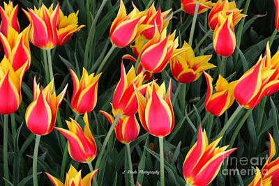Cheerful Spring Tulips Art Print