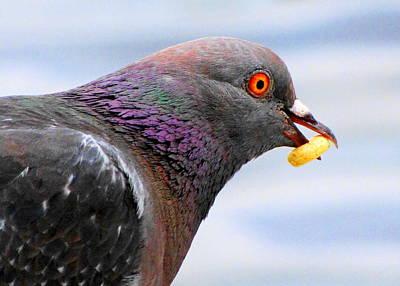Photograph - Cheerio Pigeon by Lori Pessin Lafargue