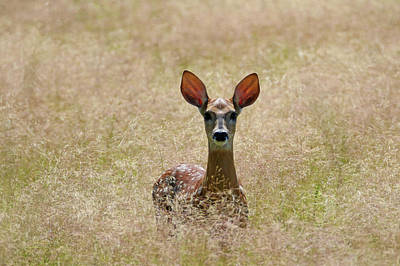 Photograph - Cheers To The Ears by Brook Burling