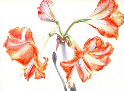 Painting - Cheery Amaryllis  by Penrith Goff