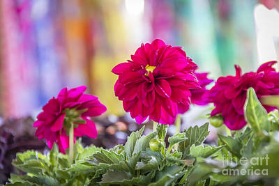 Photograph - Cheery Pink Flowers by Joann Long