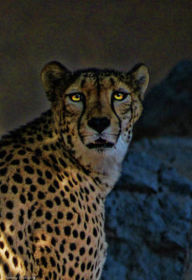 Landscape Photos Chad Dutson - Cheetah 1 by Tommy Anderson