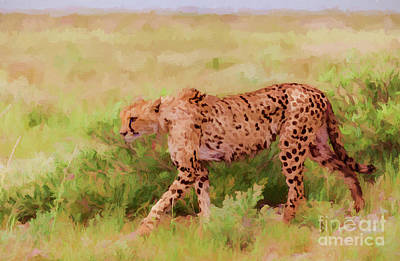 Digital Art - Cheetah Acinonyx Jubatus Etosha Np Namibia by Liz Leyden