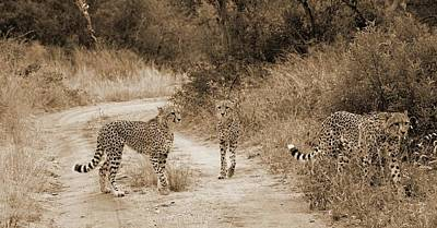 Photograph - Cheetah Brothers by Felix Concepcion