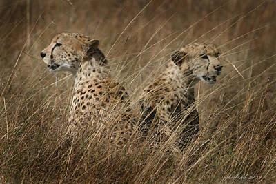 Cheetah Brothers Original by Joseph G Holland