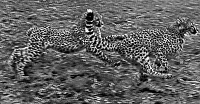Photograph - Cheetah Cabs Speeding  by Miroslava Jurcik