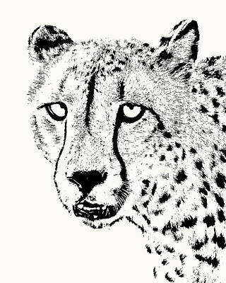 Photograph - Cheetah Close-up by Scotch Macaskill