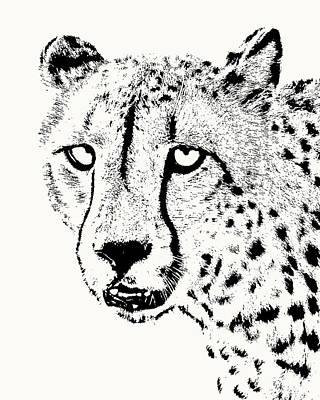 Art Print featuring the photograph Cheetah Close-up by Scotch Macaskill