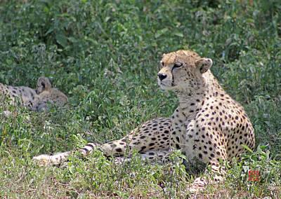 Digital Art - Cheetah by David Jenkins