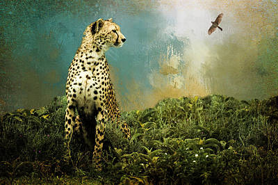 Photograph - Cheetah by Diana Boyd