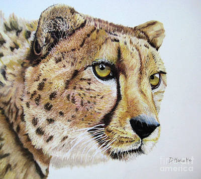 Painting - Cheetah by Diane Marcotte