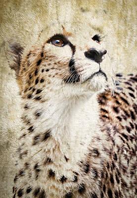 Photograph - Cheetah Feline II by Athena Mckinzie