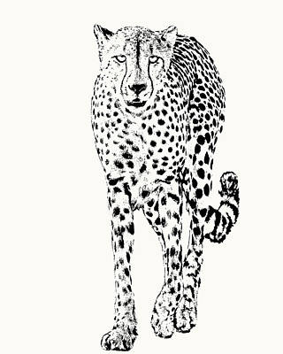 Cheetah Full Figure, Front-on View Art Print