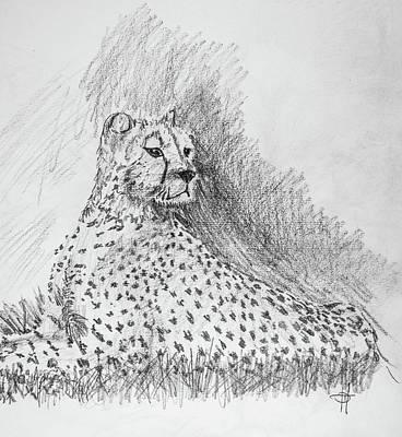 Cheetah Drawing - Cheetah by George Desire Herman
