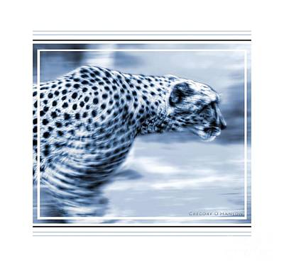 Gregory Ohanlon Photograph - Cheetah by Gregory Ohanlon