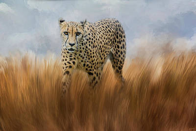 Photograph - Cheetah In The Field by Jai Johnson