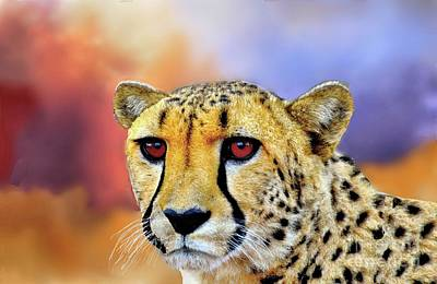 Photograph - Cheetah by Janette Boyd