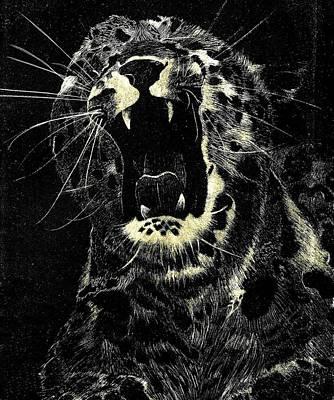 Cheetah Drawing - Cheetah  by Jesse Temple