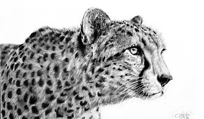 Drawing - Cheetah  by Lachri