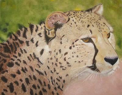 Cheetah Drawing - Cheetah by Lori Hanks