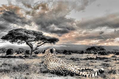 Photograph - Cheetah  by Michael Damiani