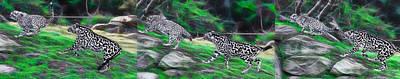 Photograph - Cheetah Mum Turn To Chase Her Cub by Miroslava Jurcik