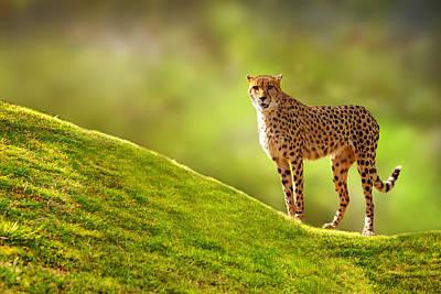 Cheetah On A Hill Art Print by Susan Schmitz