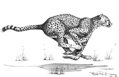 Cheetah Drawing - Cheetah On The Kill by Bob Patterson