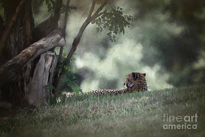 Cheetah On Watch Art Print