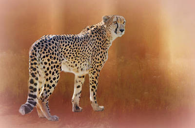 Photograph - Cheetah Portrait by Diane Alexander