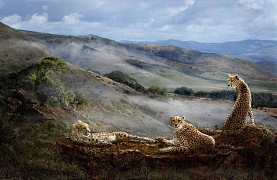 Photograph - Cheetah Ridge by Melinda Hughes-Berland