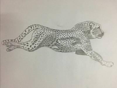 Cheetah Drawing - Cheetah by Subrahmanya Hegde
