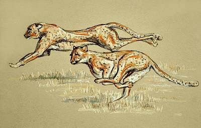 Drawing - Cheetahs Running Free by Heidi Kriel