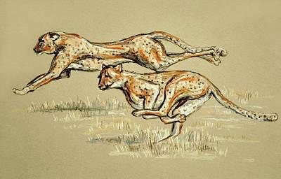 Drawing - Cheetahs Running Free by Heidi Kriel