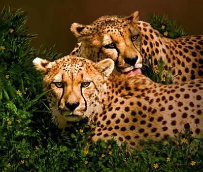 Cheetah Digital Art - Cheetahs  by Thanh Thuy Nguyen