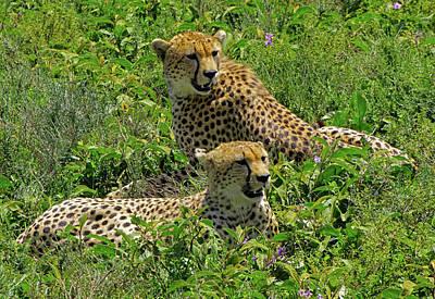 Photograph - Cheetahs Waiting by Dennis Cox WorldViews