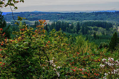 Photograph - Chehalis Lookout by Tikvah's Hope