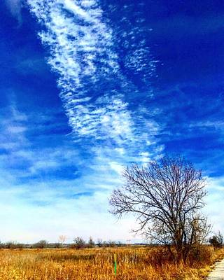 Photograph - Chemtrails Point To The Burr Oak by Michael Oceanofwisdom Bidwell