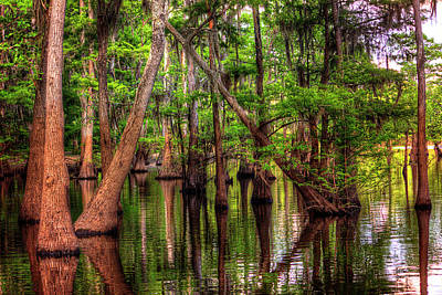 Photograph - Louisiana Cheniere Lake Bayou by Ester Rogers