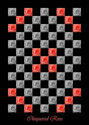 Chequered Rose Art Print