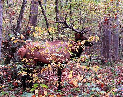 Photograph - Cherokee Elk by Joshua Bales