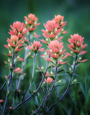 Cherokee Prairie Paintbrush Print by James Barber