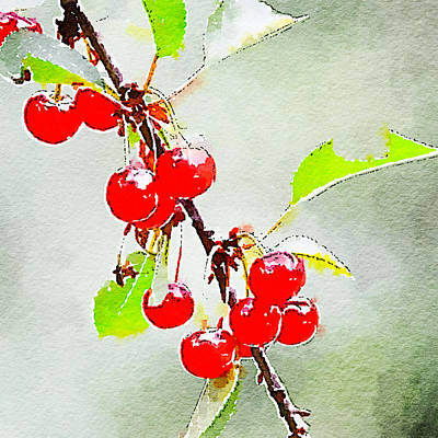 Photograph - Cherries 1 by Ronda Broatch