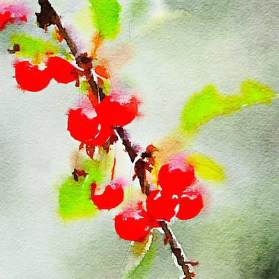 Photograph - Cherries 2 by Ronda Broatch