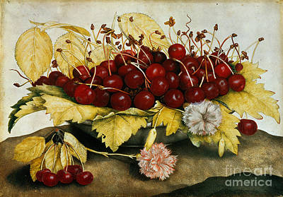 Floral Still Life Painting - Cherries And Carnations by Giovanna Garzoni