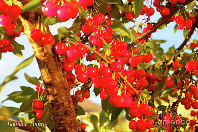 Digital Art - Cherries by Donna L Munro