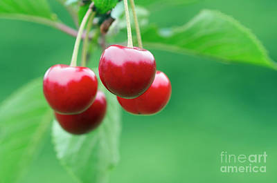 Photograph - Cherries by Michal Boubin