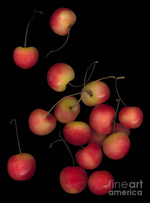 Photograph - Cherries Multiplied by Heather Kirk