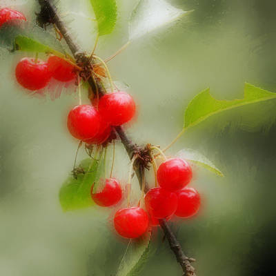 Photograph - Cherries  by Ronda Broatch